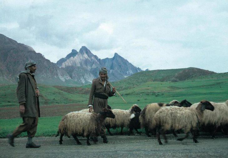 Kurdish herders near Sulaymaniyah in northeastern Iraq