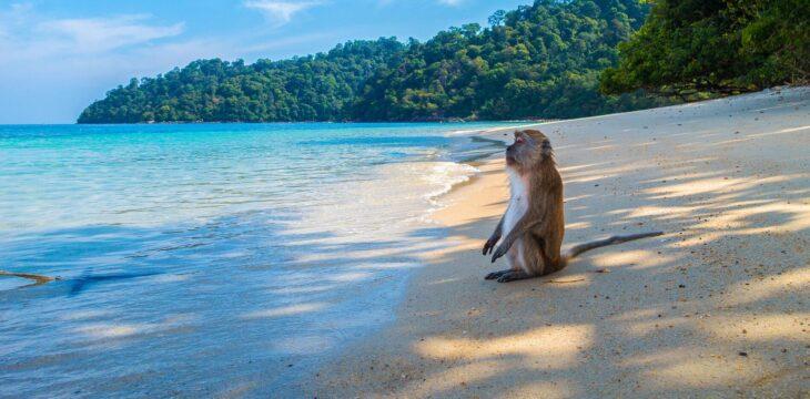 Thailand's most popular beaches